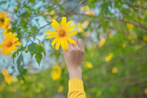 hoa da quy ba vi